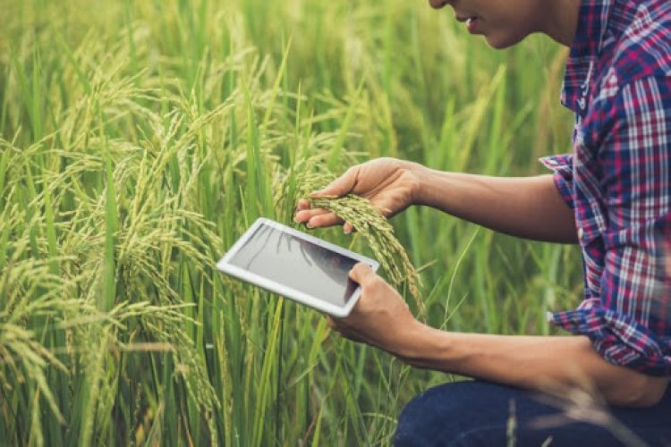 To be or not to be, that is the question: The millennial farmers in India
