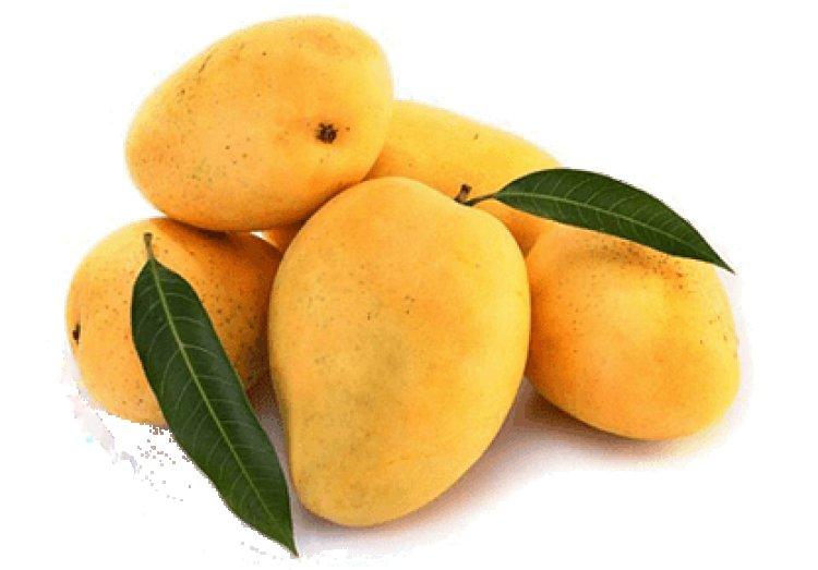 ICAR lab developing bioactive mangoes