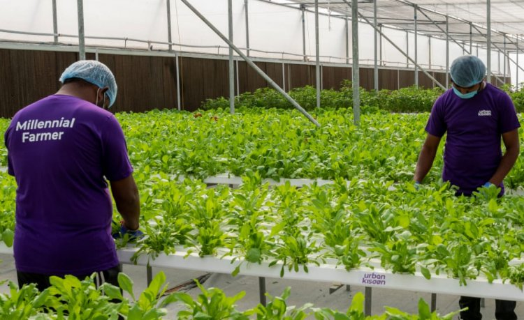 BASF Venture Capital invests in Indian hydroponics pioneer UrbanKisaan