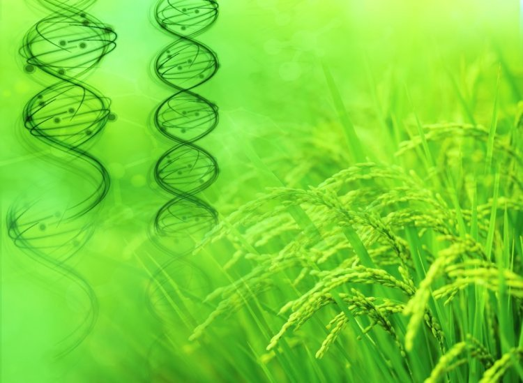 IAAG expresses serious concern on the delay in draft guidelines for genome-edited plants