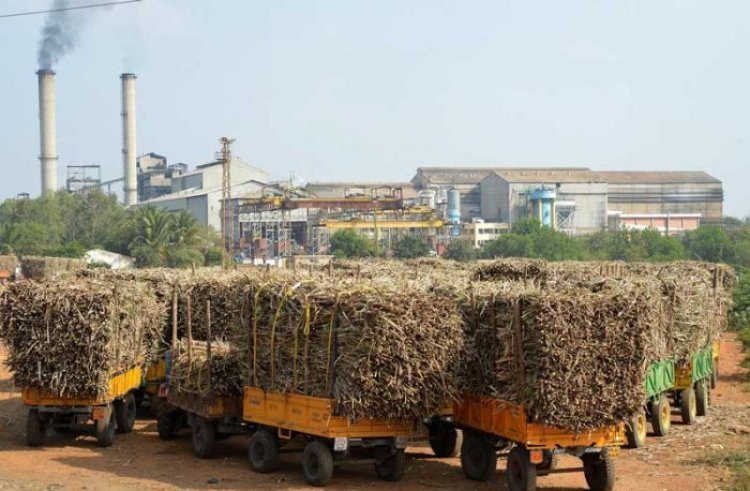 UP sugar mills stand in arrears of Rs 4,450 cr to the cane farmers for last crushing season